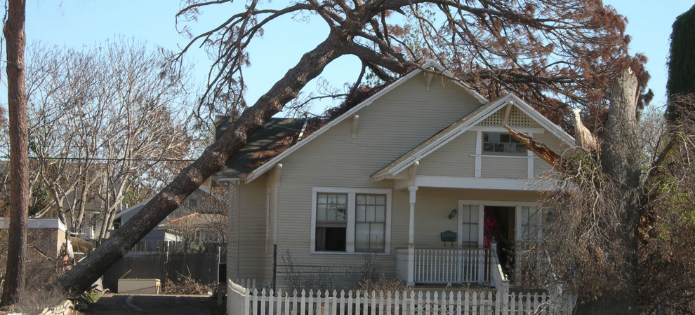 Calgary Emergency Tree Removal