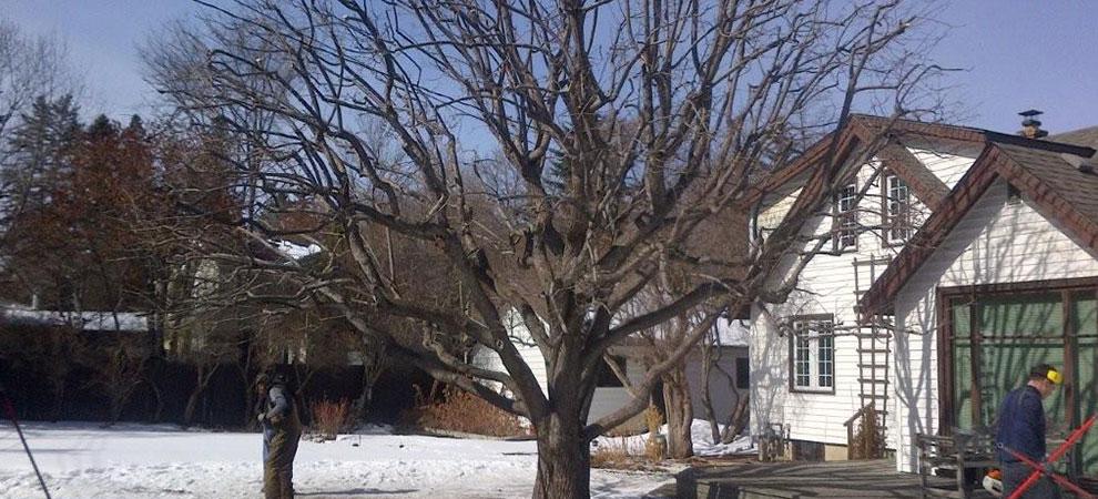 Mol Tree Service Ltd. FAQ